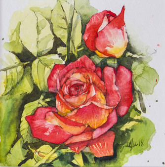 Rose rot