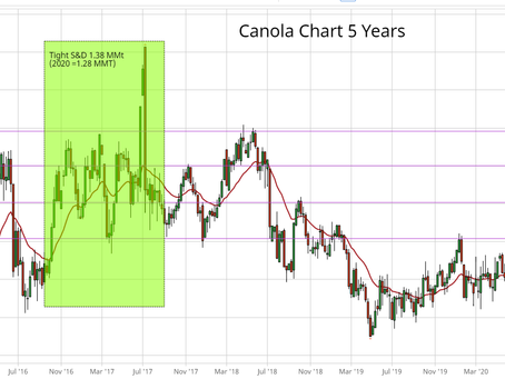 2020 Canola Hot or Not
