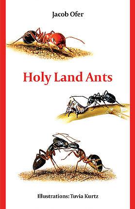 Holy Land Ants