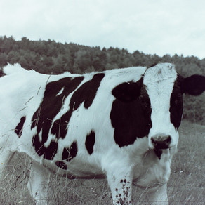 Is a family dairy farm better?