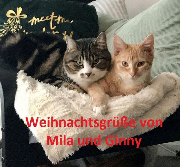 Mila und Ginny - Theen (2)-1.jpg
