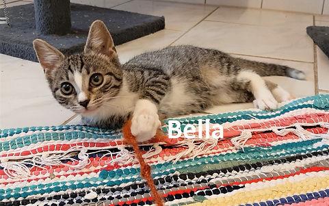 Bella (5)-1.jpg