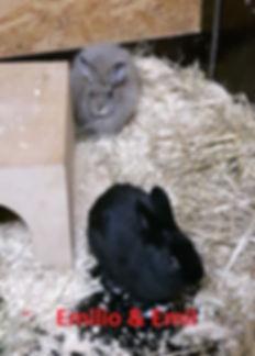Kaninchen Emilio und Emil (2)-1.jpg