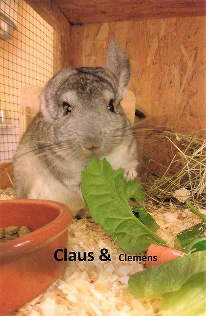 Chinchilla Claus & Clemens (5)-1.jpg