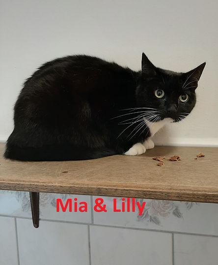 Mia und Lilly (4)-1.jpg