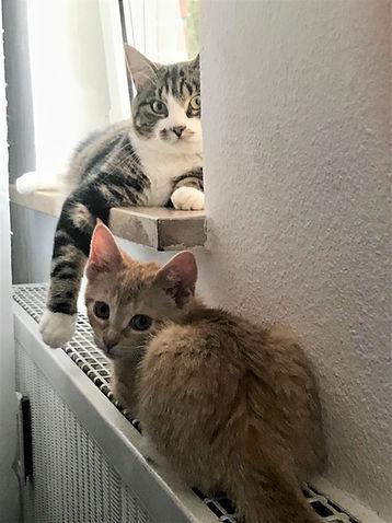 Ginny und Mila