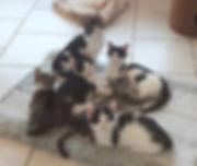 Katzenwelpen1 (2).jpg