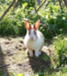 Kaninchenmädel_Lale_(2).jpg