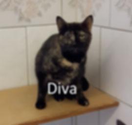 Diva (2)-1.jpg