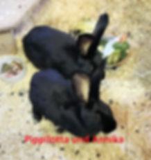 Kaninchen Pippi und Annika (2)-1.jpg