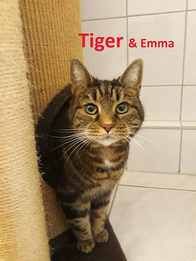 Tiger (2)-1.jpg