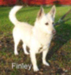 Finley (29)-1-1.jpg