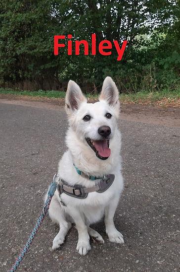 Finley (9)-1.jpg
