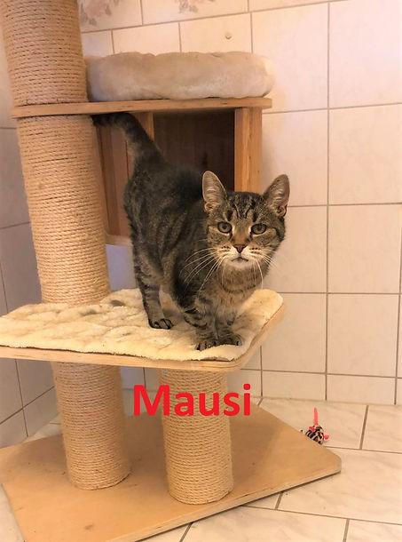 Mausi (4)-1.jpg