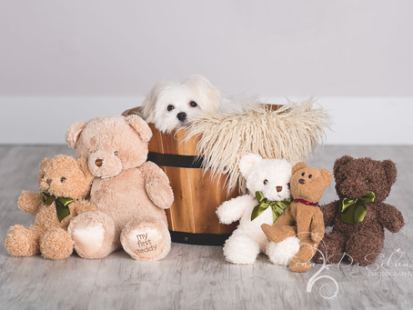 Teddy the Overnight Model