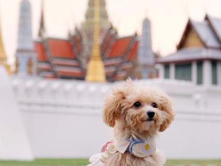 Pet-Friendly Locations in Thailand