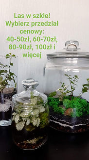 FB_IMG_3170739905735696591.jpg