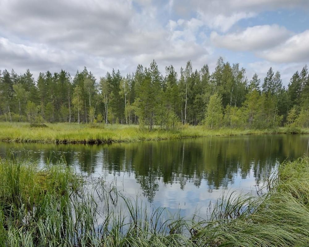 Kuvassa Honkajoen metsä- ja vesistömaisemaa.