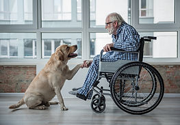 A man in wheelchair interacting with dog.