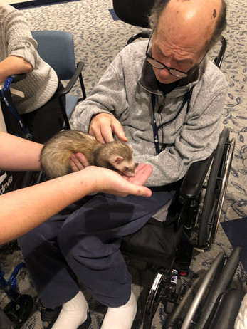 Greenview Resident Petting a Ferret