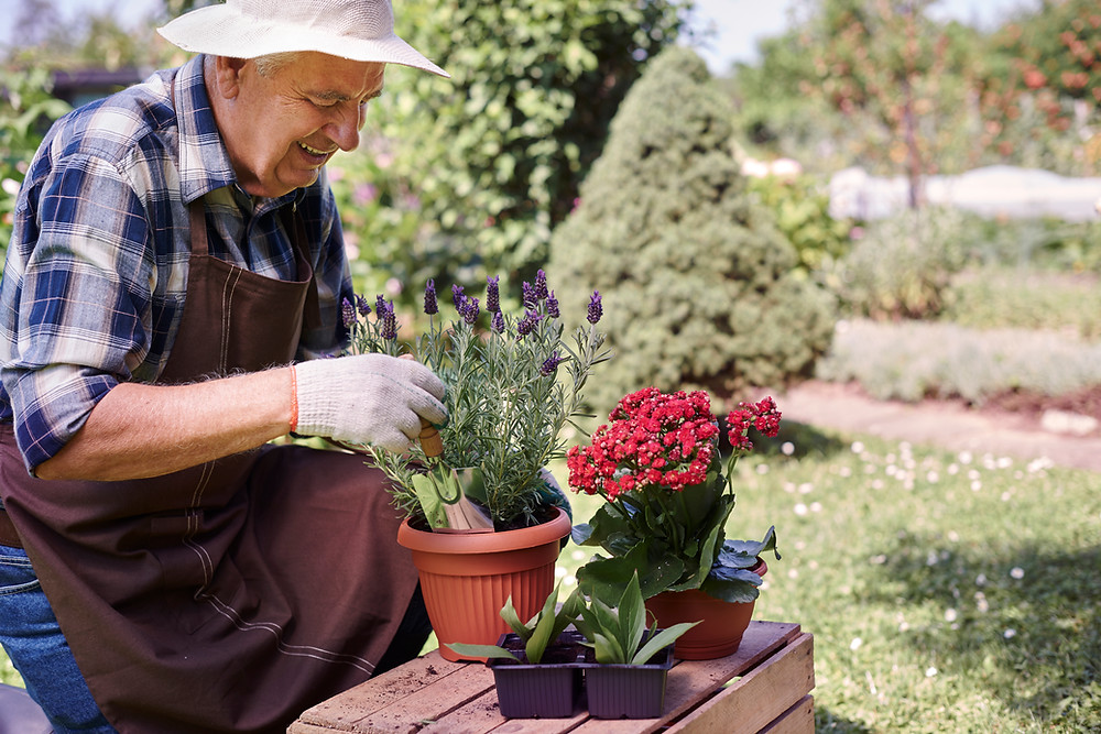 senior man in a garden putting soil into a potted plant