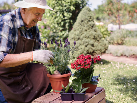 How Gardening is Benefiting Seniors' Mental and Physical Health