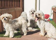 Doggy Daycare, My Dogs Den