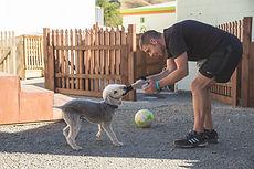Beddlington Terrier, My Dogd Den