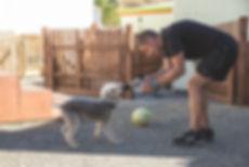 Groomingtails, Bedlington Terrier