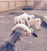My Dogs Den Doggy Daycare