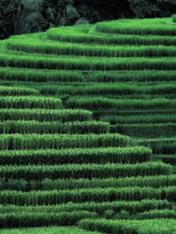 Haluatko maksaa riisipellon katselemisesta? Sellainenkin vaihtoehto on tarjolla.