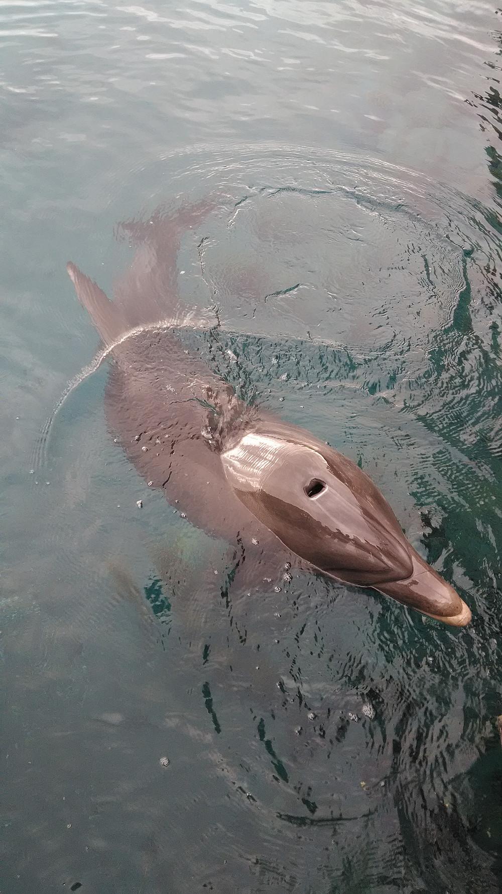 Delfiinit tulevat aivan lähelle ihmisiä.