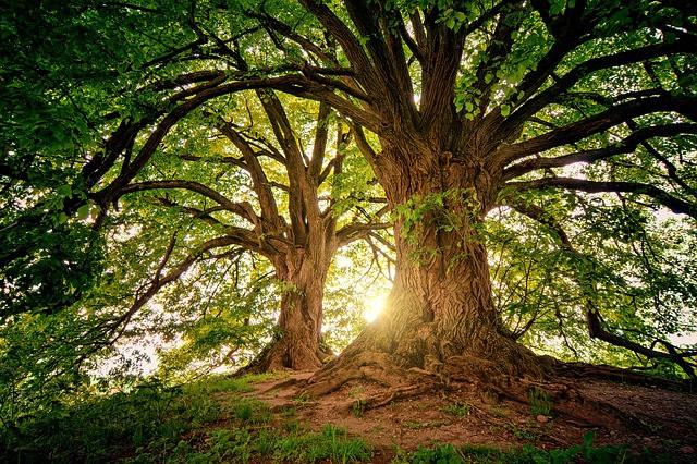 Raha ei kasva puussa, vaikka setelit paperia ovatkin.