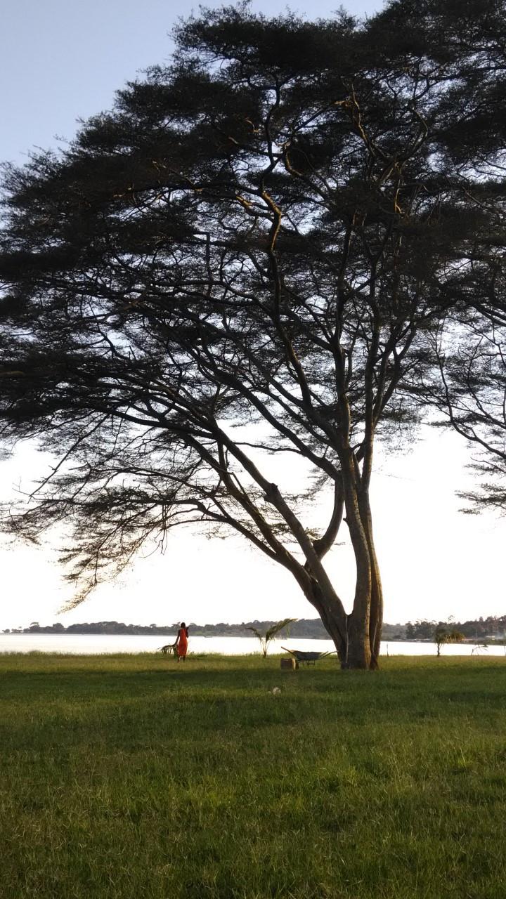 Victoriajärvi esiintyy monissa Afrikan mantereesta kertovissa kirjoissa.