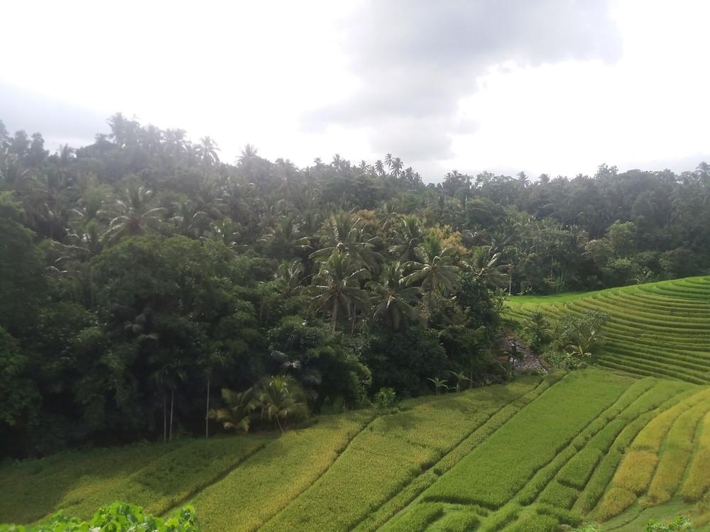 Indonesia itsenäistyi vuonna 1945.