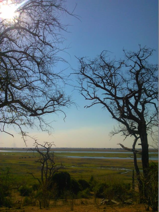 Chobessa näkee monia muitakin villieläimiä kuin afrikannorsuja.