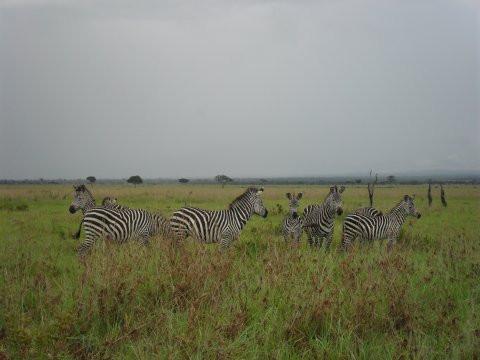 Safarilla näkee ainakin seeproja.