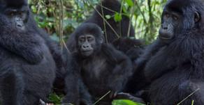Uganda on mukavan viileä ja virikkeellinen matkailumaa