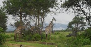 Tansanian päiväkirja / helmikuu 2012 osa 2