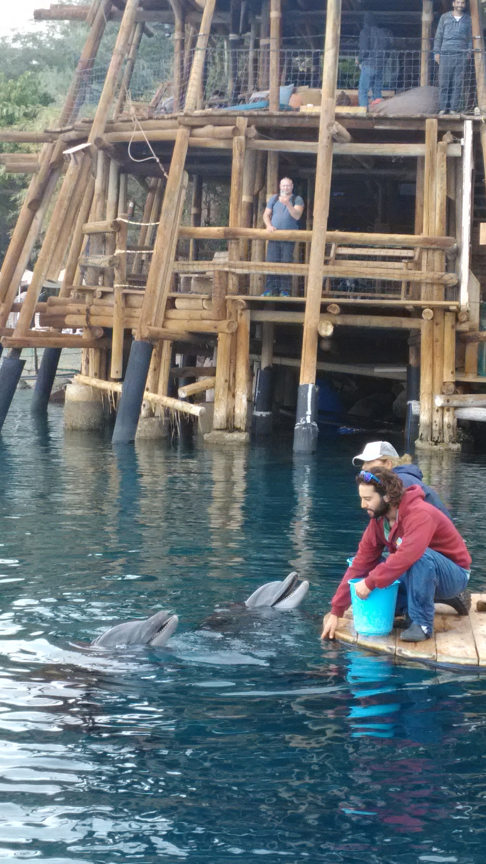 Dolphin Reefissä näkee vapaita delfiinejä.
