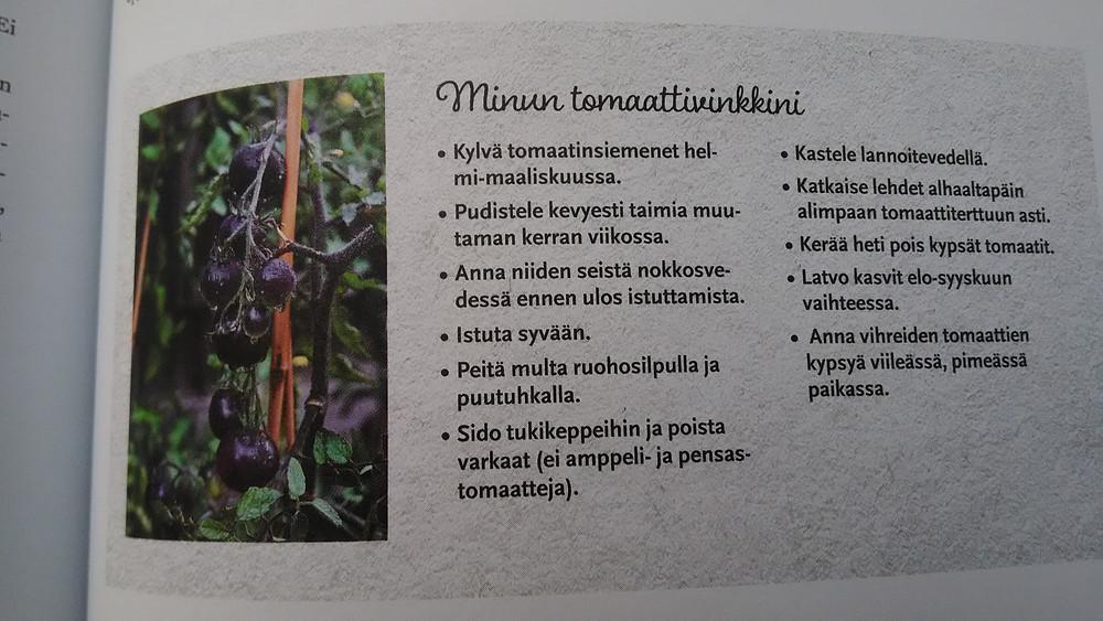 Tomaatin kasvatus itse sujuu näillä vinkeillä.