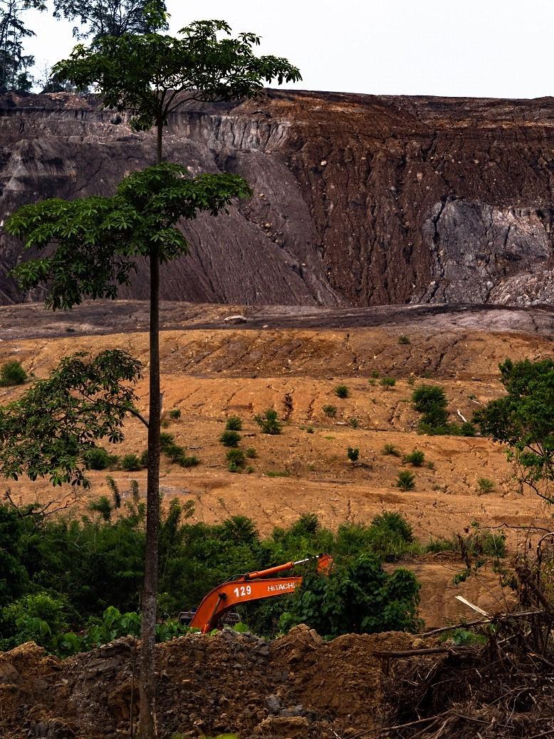 Saippuoissa ja muun muassa kekseissä käytetty palmuöljy johtaa Kaakkois-Aasian sademetsien häviämiseen.