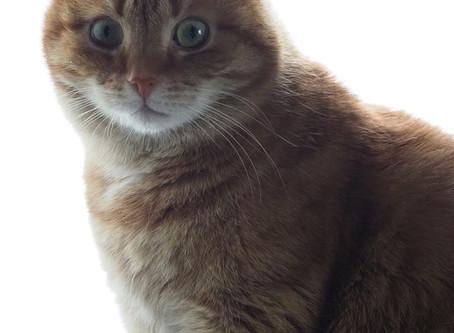 Zooplus - virtsakiviä vähentäviä kissanruokia