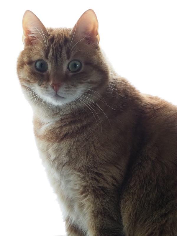 Virtsakivet vaivaavat kissoja valitettavan usein – näin ehkäiset niiden syntymistä!