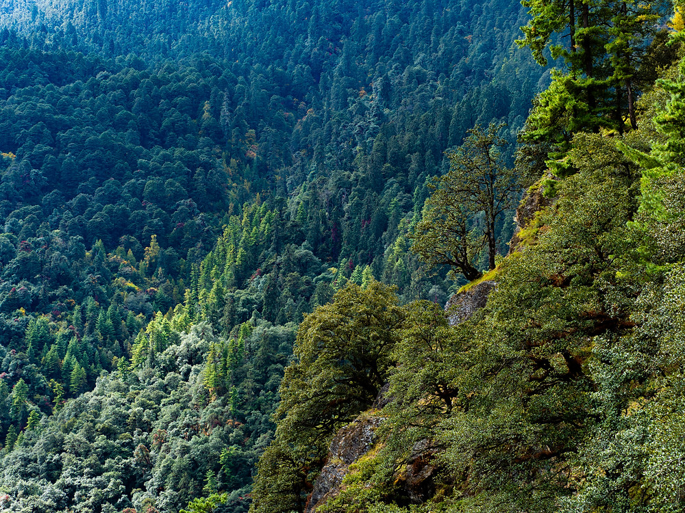 Metsiä on selkeästi yli puolet Bhutanin pinta-alasta.