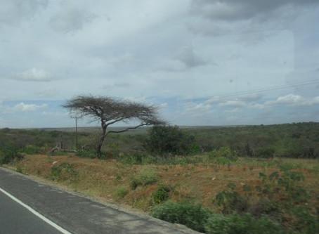 Tansanian päiväkirja / maaliskuu 2012