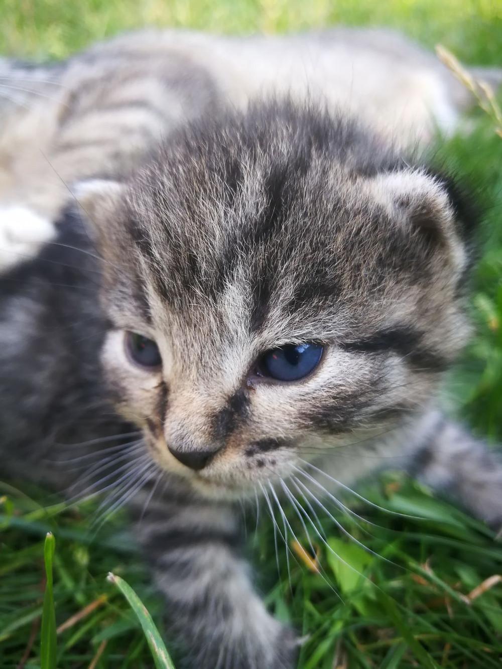 Kissa kannattaa ilmoittaa ilmaiseksi Kissaliiton rekisteriin.
