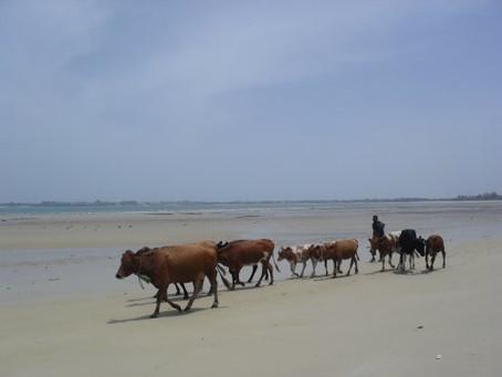 Tansanian päiväkirja / huhtikuu 2012