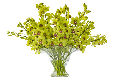 Green Cymbidian Orchids