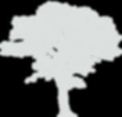 oak-clipart-little-tree-6.png